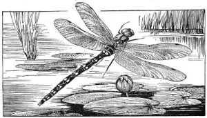 mammoth095dragonfly