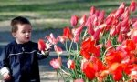 Tulips for the next generation of Southern Baptists